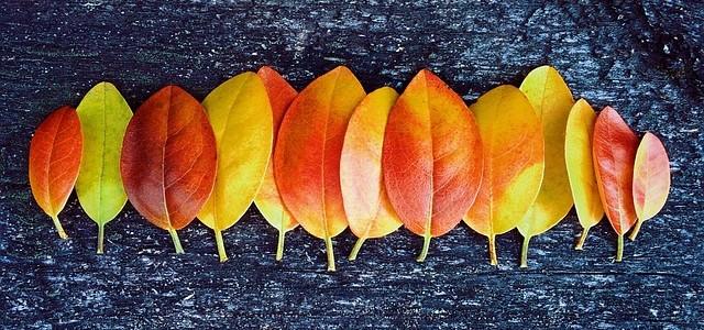 Pár podzimních receptů